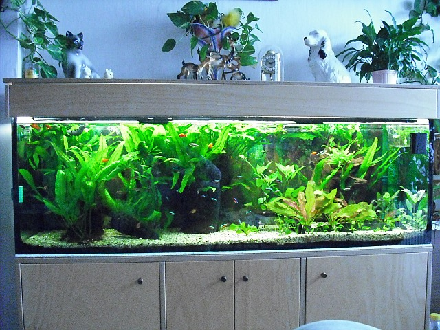 leuchtstofflampen beleuchtung f r 200x40x60 aquarium forum. Black Bedroom Furniture Sets. Home Design Ideas